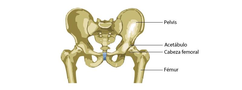 partes de una cadera