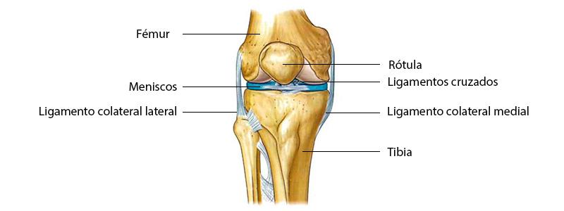 Qué es la rodilla y cuándo necesito una prótesis? – MBA Blog
