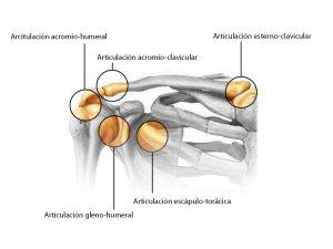 fracturas de hombro resumen